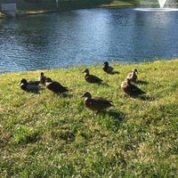 Photo taken at The Duck Pond by Penny N. on 10/12/2012