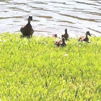 Photo taken at The Duck Pond by Penny N. on 6/5/2013
