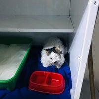 11/8/2017 tarihinde Kadir C.ziyaretçi tarafından Pet Clinic'de çekilen fotoğraf