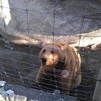 Photo taken at Tbilisi Zoo | თბილისის ზოოპარკი by Vadim K. on 3/19/2013
