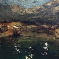 Das Foto wurde bei Cenote San Ignacio von Tere A. am 3/31/2013 aufgenommen