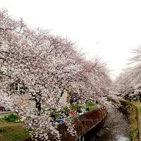 Photo taken at 千本桜 by BooNoButa on 3/23/2013