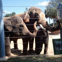 Foto scattata a Houston Zoo da John M. il 10/4/2012