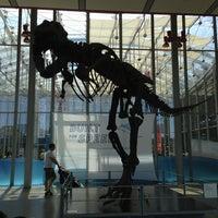 Photo taken at Steinhart Aquarium by Dismas S. on 5/24/2013