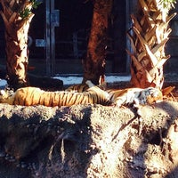 Photo taken at busch gardens  Cheetah Shop by Sergio on 1/24/2014