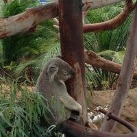 7/19/2013 tarihinde Shawn C.ziyaretçi tarafından Koala Exhibit'de çekilen fotoğraf