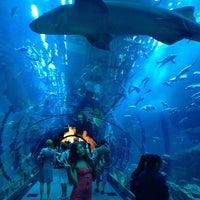 Photo taken at The Dubai Mall by Karina on 5/12/2013