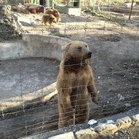 Photo taken at Tbilisi Zoo | თბილისის ზოოპარკი by Lena Z. on 3/19/2013