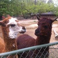 Das Foto wurde bei Kölner Zoo von Sergey R. am 5/1/2013 aufgenommen