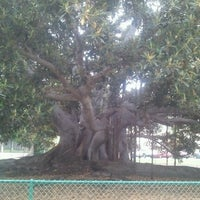 Photo taken at Moreton Bay Fig Tree by Michael M. on 8/24/2012