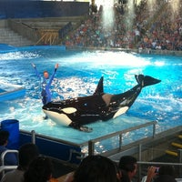 Photo taken at Shamu Theater by Allen A. on 6/18/2011