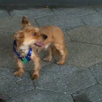 Photo taken at East River Esplanade South Dog Run by Alexandra V. on 7/17/2011