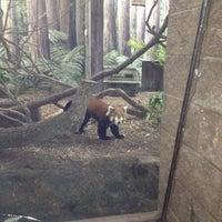 1/4/2012 tarihinde LeeAnne D.ziyaretçi tarafından Red Panda Habitat'de çekilen fotoğraf