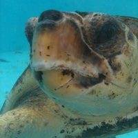 Photo taken at Loggerhead Marinelife Center by Mary B. on 6/23/2012