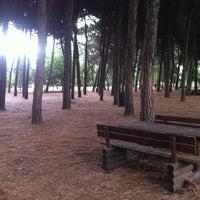 Photo taken at Pineta di Pinarella by Simone SiMona Valter C. on 8/9/2011