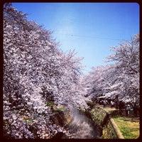 Photo taken at 千本桜 by Yasuyuki S. on 4/9/2012