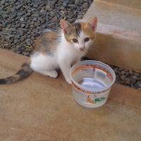 Photo taken at Hawaiian Humane Society by Wayne O. on 4/25/2012