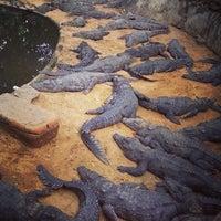 Photo taken at Crocodile Bank by Pankaj K. on 10/11/2013
