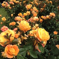 Photo taken at International Rose Test Garden by John B. on 6/27/2013
