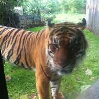 Photo taken at ZSL London Zoo by Russell B. on 10/29/2012