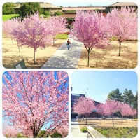 Photo taken at Foothill College by MinTz on 3/27/2013