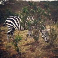Photo taken at Lake Naivasha Kongoni Lodge by BORN TO FUNK on 8/31/2013
