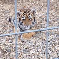 Photo taken at Exotic Feline Rescue Center by Nikki on 11/17/2013