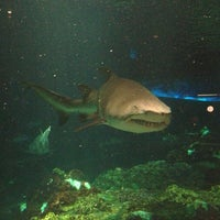 Photo taken at Sharks Underwater Grill by Andrey K. on 9/12/2013