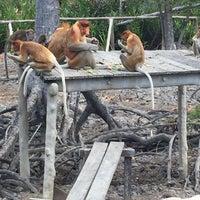 Photo taken at Labuk Bay Proboscis Monkey Sanctuary by  ᴊαnє  on 4/15/2016