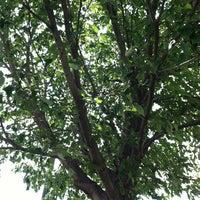 Photo taken at Under The Tree by Jennifer S. on 6/25/2013