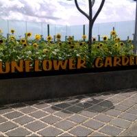 Das Foto wurde bei Sunflower Garden von Sa samantha Y. am 1/1/2013 aufgenommen