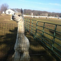 Photo taken at Alspaca's Farm by Rebecca S. on 12/2/2012