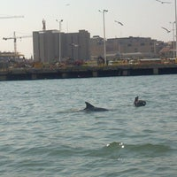 Photo taken at Baywatch Dolphin Tours by Shora H. on 7/5/2013