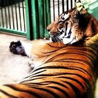 Photo taken at Prague Zoo by Evgenia on 10/16/2012