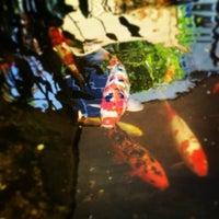 Photo taken at Sushi Garden by Ovidiu C. on 6/16/2016