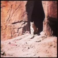 Photo taken at Arizona-Sonora Desert Museum by Laura F. on 3/24/2013