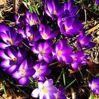 Foto scattata a Riverside Park - 91st Street Garden da Pete L. il 3/30/2013