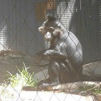 Photo taken at Monkey Exhibit by Kelly H. on 4/13/2016