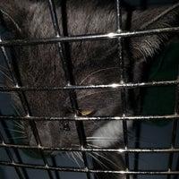 Photo taken at Pet Samaritan Clinic by Beth H. on 1/8/2014
