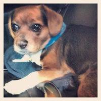 10/2/2012にJessicaがPetSmartで撮った写真