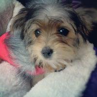 10/10/2012にJessicaがPetSmartで撮った写真