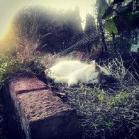 11/3/2013 tarihinde Fırat Ş.ziyaretçi tarafından D-life'de çekilen fotoğraf