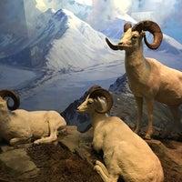 Photo prise au Hall of North American Mammals par Tom B. le3/31/2017