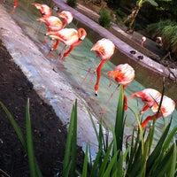 Photo taken at Flamingo Exhibit by Kati on 1/11/2013