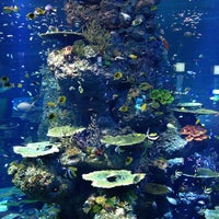 Photo taken at S.E.A. Aquarium by Bee Kwang L. on 2/19/2013