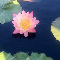 Photo taken at Monet's Garden at The New York Botanical Garden by Lane M. on 10/20/2012