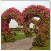 Photo taken at Dubai Miracle Garden by Fatima M. on 5/8/2013
