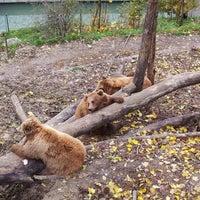 Das Foto wurde bei Bärenpark von Blogiy am 11/12/2012 aufgenommen