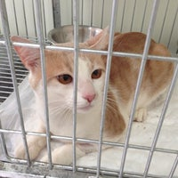 Photo taken at Pet Center by Temistocles S. on 10/24/2012