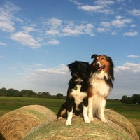 Photo taken at Shelby Farms Dog Park by Ellen on 10/7/2012